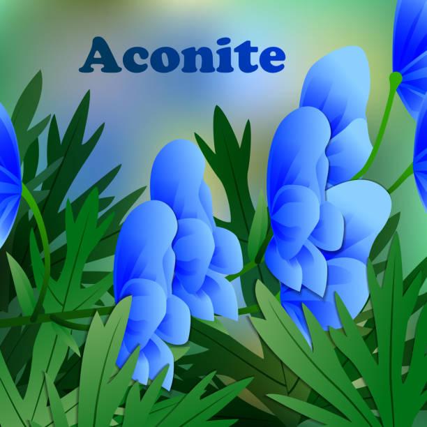 schöne frühlingsblumen aconitum. karten oder ihr design mit platz für text. vektor - eisenhut stock-grafiken, -clipart, -cartoons und -symbole