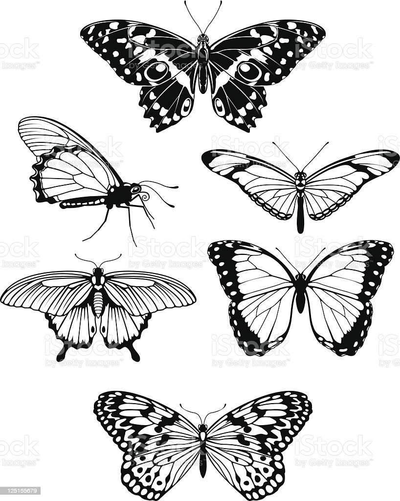 Beautiful stylised butterfly outline silhouettes royalty-free stock vector art