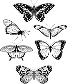 A set of beautiful stylised butterfly outline silhouettes