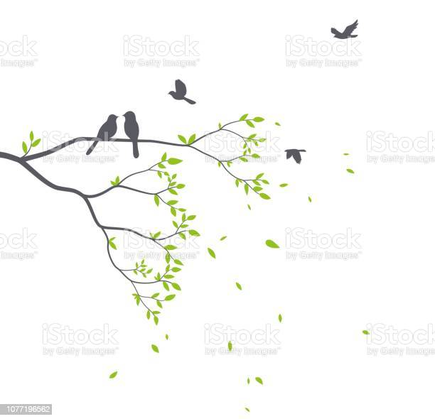 Beautiful tree branch with birds silhouette background for wallpaper vector id1077196562?b=1&k=6&m=1077196562&s=612x612&h=e2alwwmls6t3ey44nusmx8kk80fgt6bhgv0x20atij0=