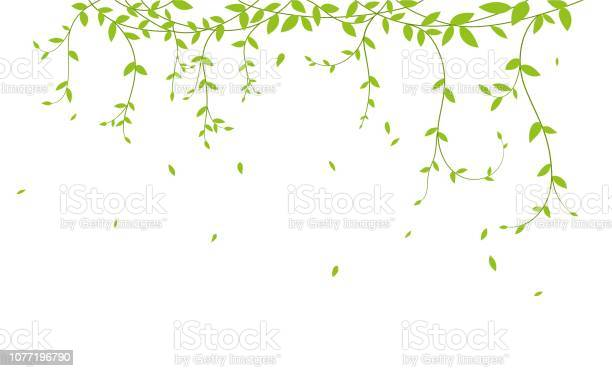 Beautiful tree branch with birds silhouette background for wallpaper vector id1077196790?b=1&k=6&m=1077196790&s=612x612&h=sm8wnjcii7xwcxb8hbjbdpez3pnsij2h2g5lrfsmdmi=
