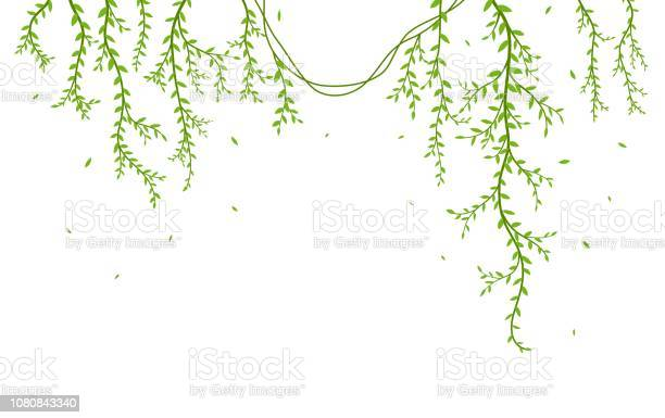 Beautiful tree branch with birds silhouette background for wallpaper vector id1080843340?b=1&k=6&m=1080843340&s=612x612&h=xsl2en0bw9o9o8usaybtvyorjt6kwm5mrvws7lk skw=