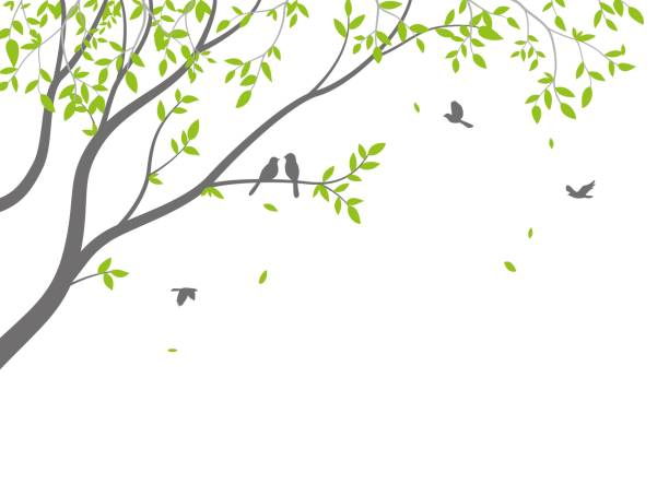 beautiful tree branch with birds silhouette background for wallpaper sticker - wood texture stock illustrations