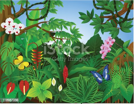 istock Beautiful tropical forest 118987036