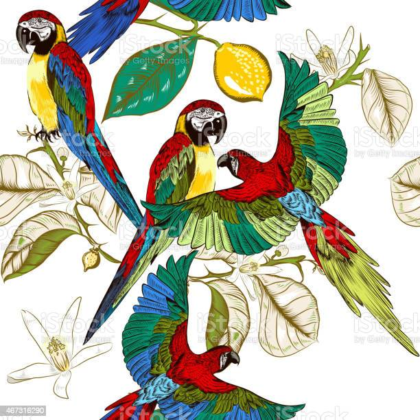 Beautiful tropical pattern with colorful parrots with lemon bran vector id467316290?b=1&k=6&m=467316290&s=612x612&h=chic0llugzf9egedef5cny0hfgewbi32kg3fz1pa7f4=