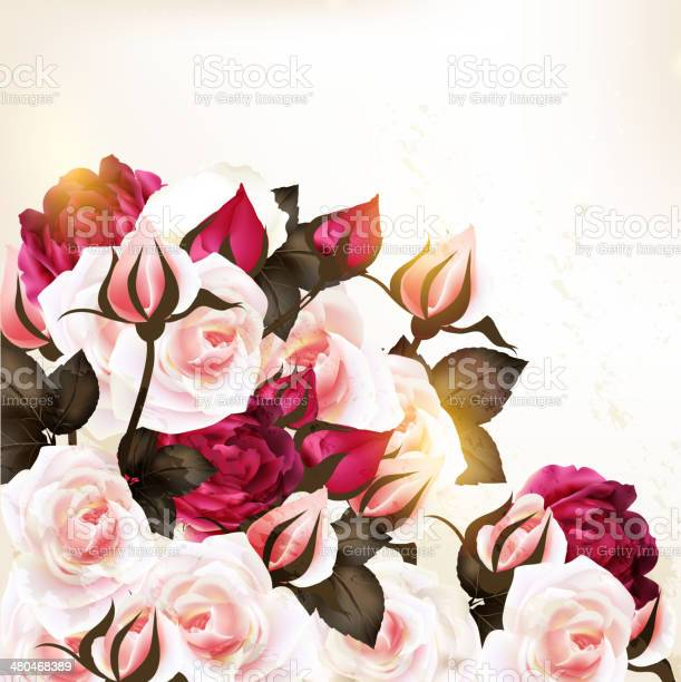 Beautiful vector background with roses in vintage style vector id480468389?b=1&k=6&m=480468389&s=612x612&h=9ctqc45oc3jwgdqck uic17d2w51d3jtfcufyqriuc0=