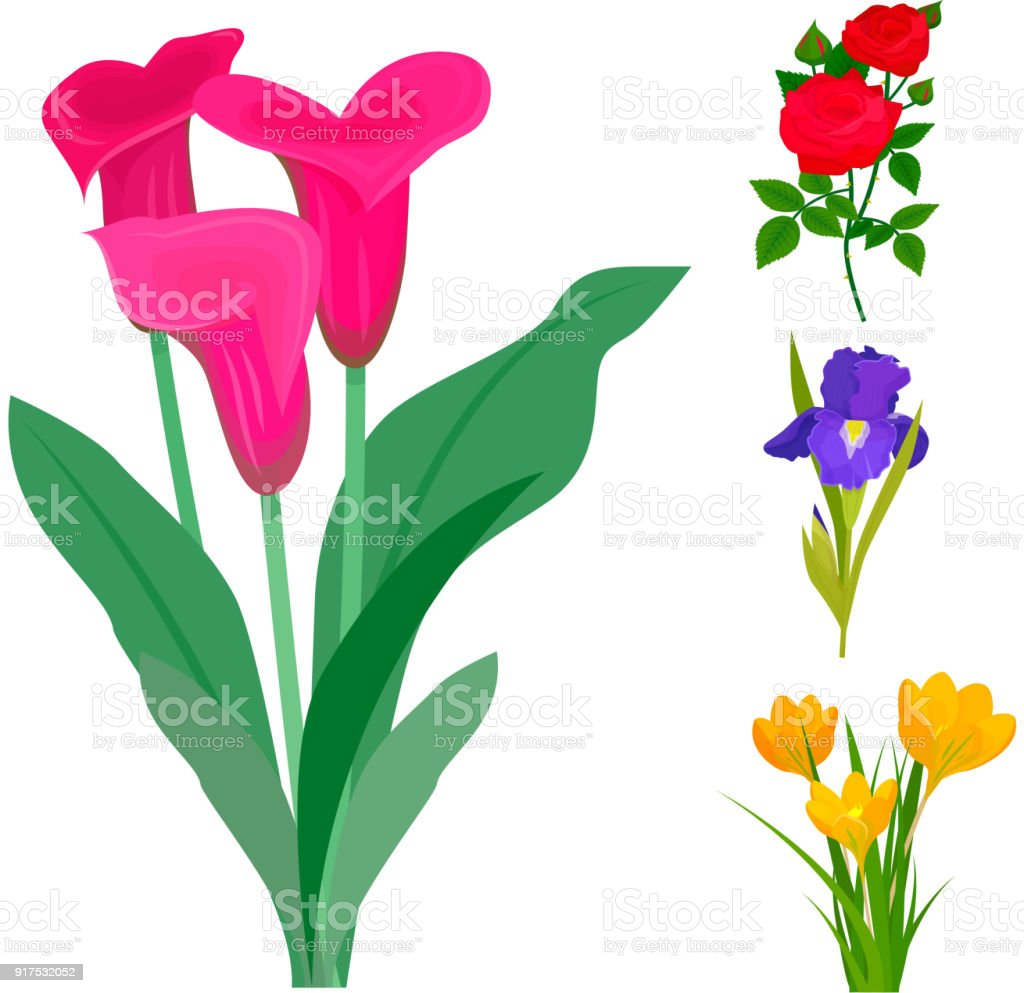 Beautiful Vector Flower Bouquet Design Decoration Nature Design