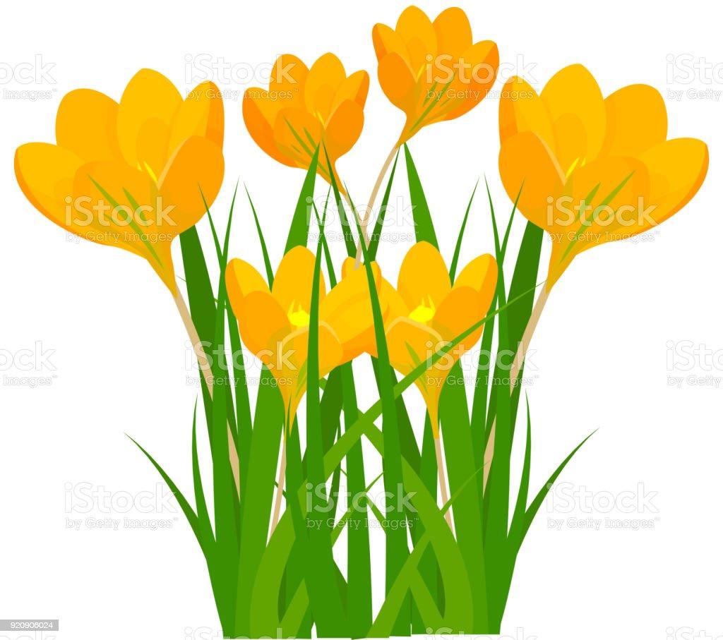 Beautiful Vector Flower Bouquet Design Decoration Nature Design