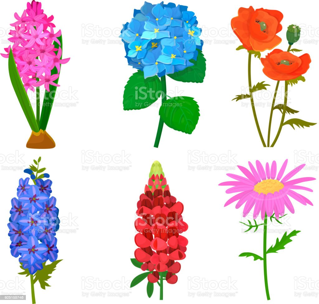Beautiful Vector Flower Bouquet Design Decoration Nature Design ...