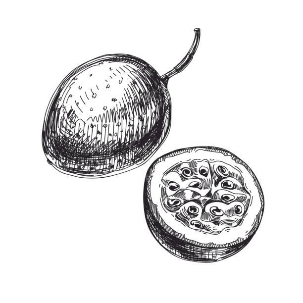 illustrations, cliparts, dessins animés et icônes de main de beau vecteur dessiné fruits exotiques illustrations. - fruit de la passion