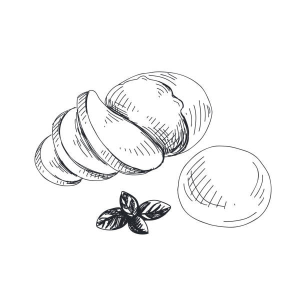 Beautiful vector hand drawn Mozzarella Illustration. Beautiful vector hand drawn Mozzarella Illustration. Detailed retro style lychee image. Vintage sketch for labels. Elements collection for design. mozzarella stock illustrations