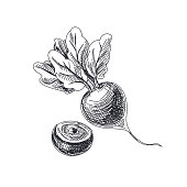Beautiful vector hand drawn vegetables Illustration.