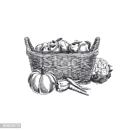 Beautiful vector hand drawn vegetables Illustration. Detailed retro style basket with vegetables and fruits image. Vintage sketch element for labels, packaging and cards design.