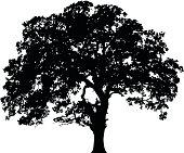 A silhouette of an oak tree