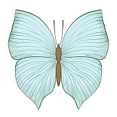 beautiful vintage green butterfly isolated on white background. Hand-drawn contour lines and strokes.