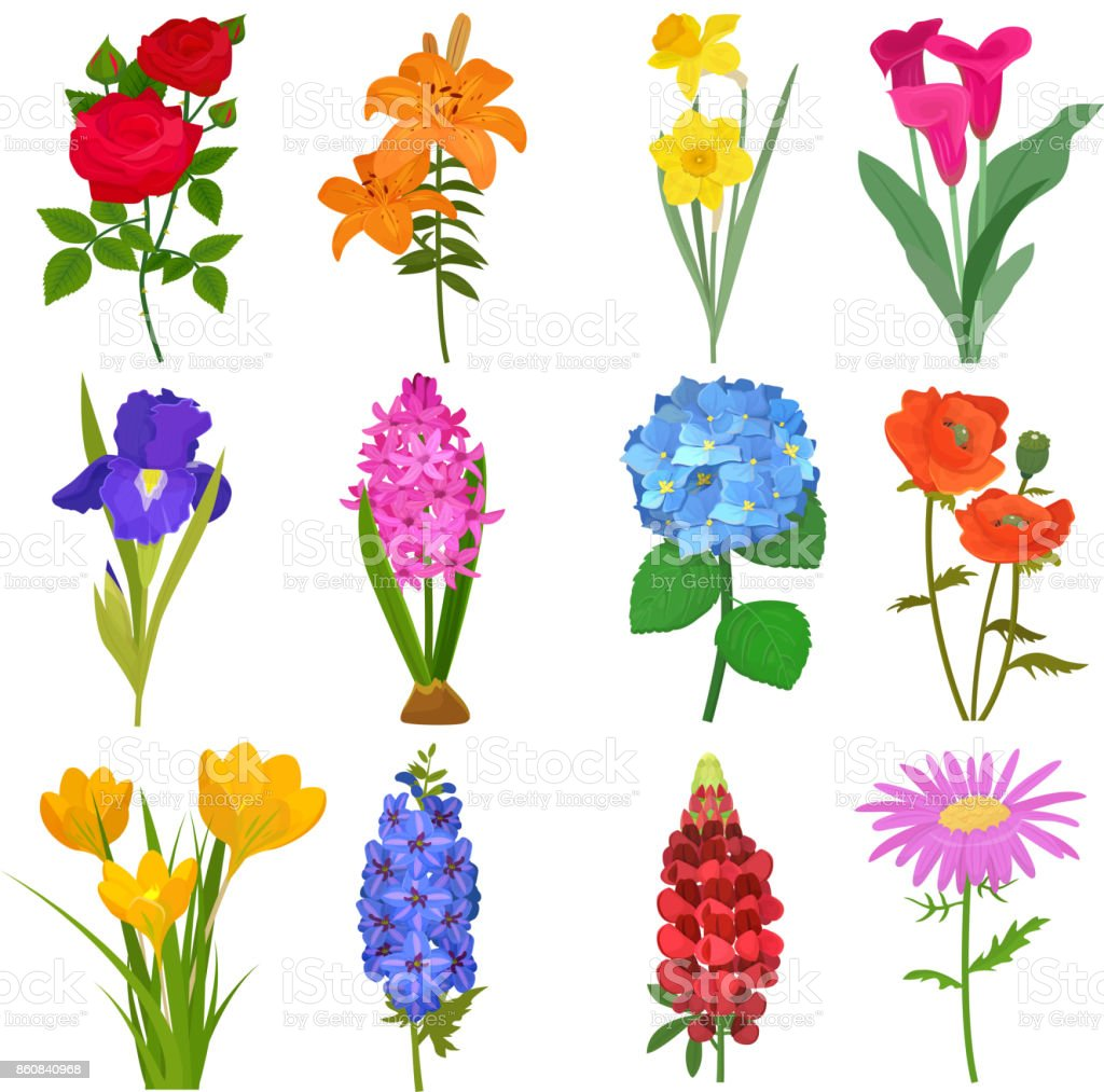 Güzel Suluboya çiçek Botanik Boyama El Yapımı Yaz şube Petal