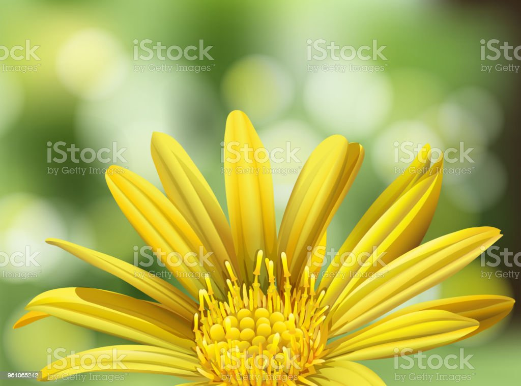 A Beautiful Yellow Daisy on Nature Background - Royalty-free Abstract stock vector