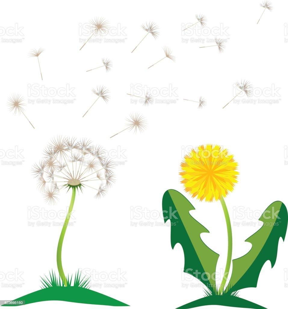 beautiful yellow dandelion with leaves flower meadow dandelion rh istockphoto com dandelion vector artwork dandelion vector black and white