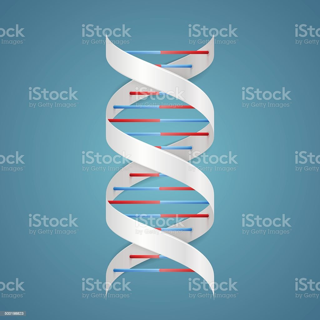 Beauty DNA vector art illustration