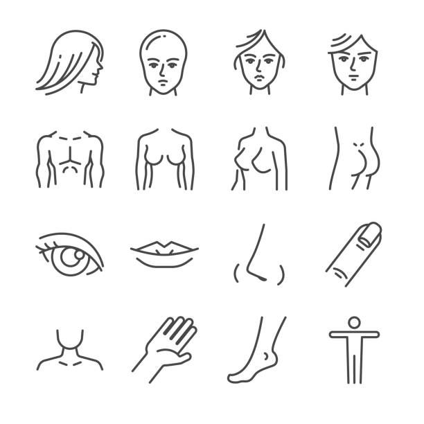 Beauty salon body parts line icon set. Included the icons as face, hair, eye, breasts, hand, hips, butt and more. Beauty salon body parts line icon set. Included the icons as face, hair, eye, breasts, hand, hips, butt and more. breast stock illustrations