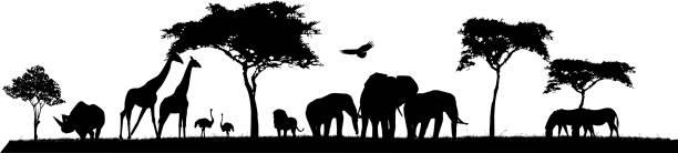 stockillustraties, clipart, cartoons en iconen met beauty silhouette of safari animal wildlife - wildplassen