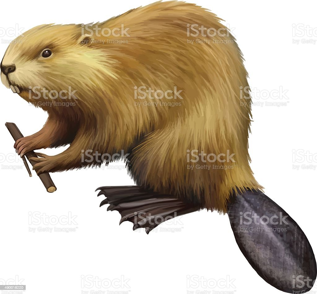 Beaver holding a tree branch vector art illustration