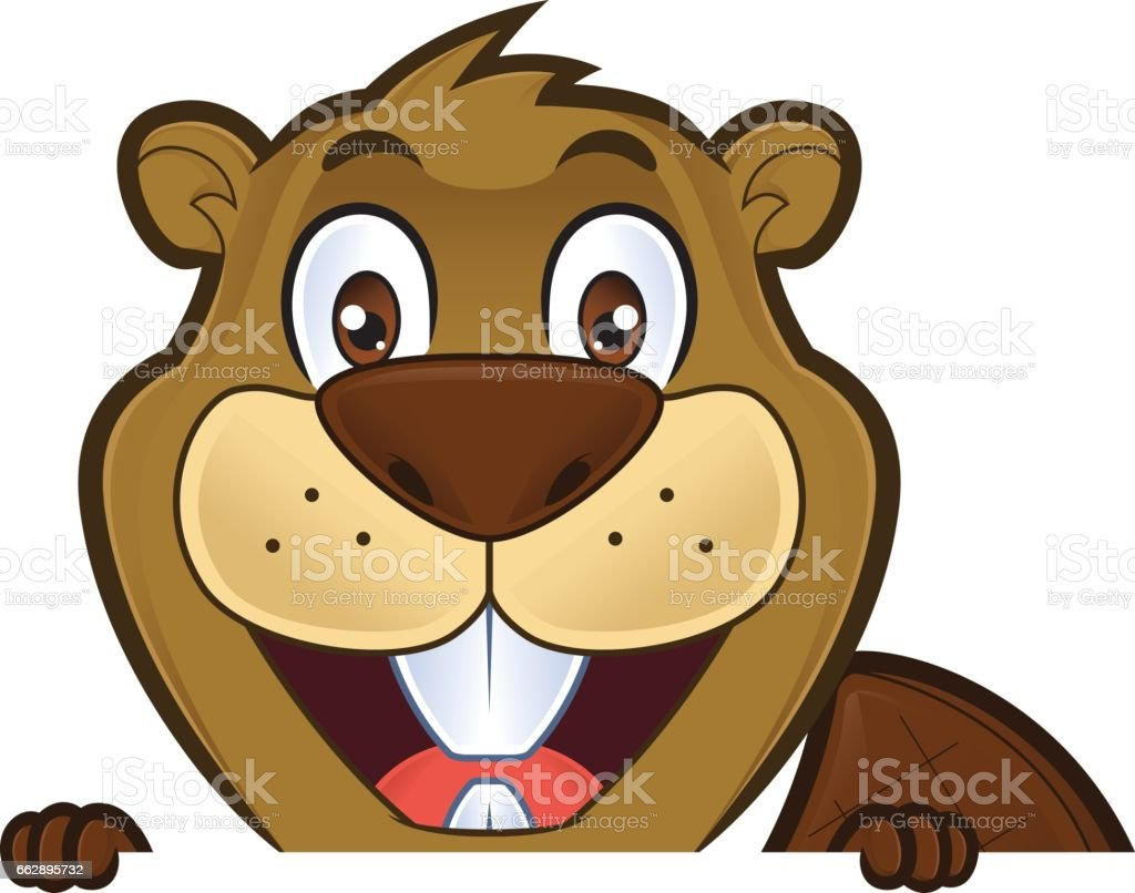 beaver holding and looking over a blank sign board stock vector
