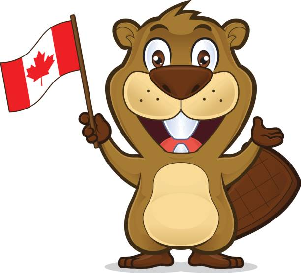 Beaver holding canadian flag Clipart picture of a beaver cartoon character holding canadian flag beaver stock illustrations