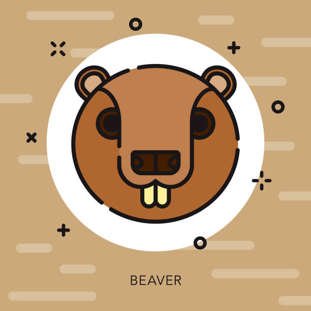 Beaver Open Outline Canadian Icon A flat design/thin Canadian line icon with small openings in the outlines to add some character. Color swatches are global so it's easy to edit and change the colors. File is built in CMYK for optimal printing and the background is on a separate layer. beaver stock illustrations
