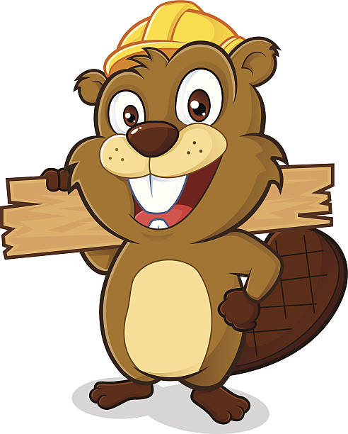 Beaver wearing a hard hat and holding a plank of wood Clipart picture of a beaver cartoon character wearing a hard hat and holding a plank of wood beaver stock illustrations