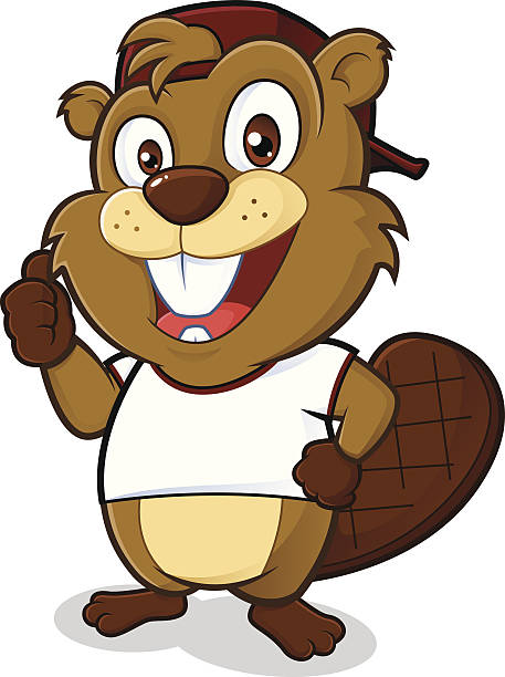 Beaver wearing a hat and a white t shirt Clipart picture of a beaver cartoon character wearing a hat and a white t shirt beaver stock illustrations