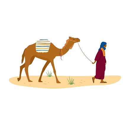 Bedouin leads his camel