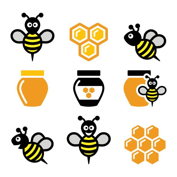 Bee and honey, honeycomb vector icons set Bee, honeycomb - food, nature vector icons set isolated on white queen bee stock illustrations
