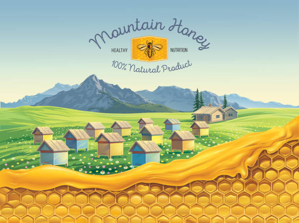 Bee apiary, and honeycombs with honey vector art illustration