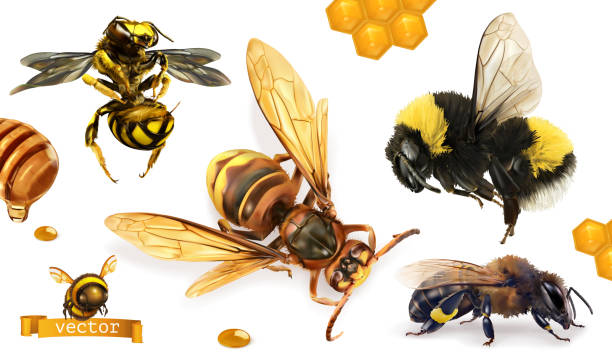 illustrazioni stock, clip art, cartoni animati e icone di tendenza di bee, bumblebee, wasp, hornet. 3d realistic vector icon set - impollinazione