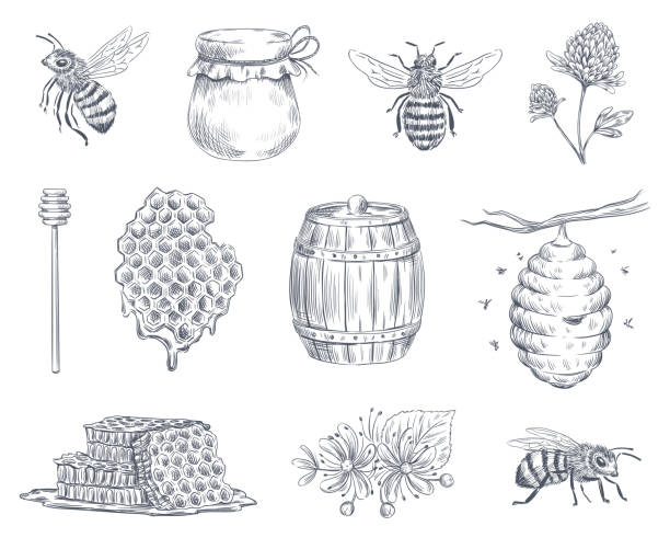illustrations, cliparts, dessins animés et icônes de gravure d'abeille. abeilles, apiculture et miel nid d'abeille vintage dessiné à la main illustration vectorielle ensemble - miel