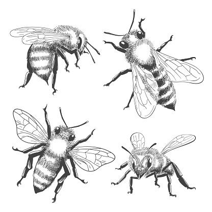 Bee engravings set