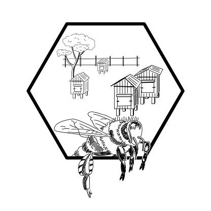 Bee, garden, beehives, hedge and tree.