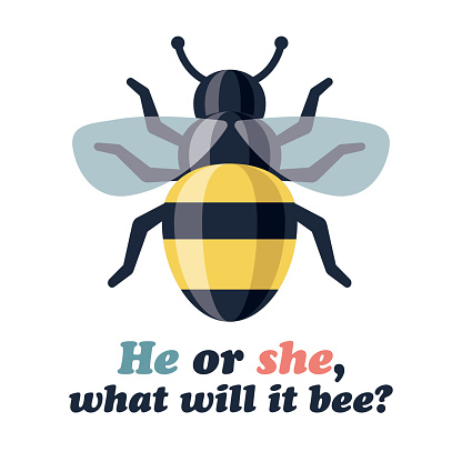 Bee Gender Reveal Icon on Transparent Background