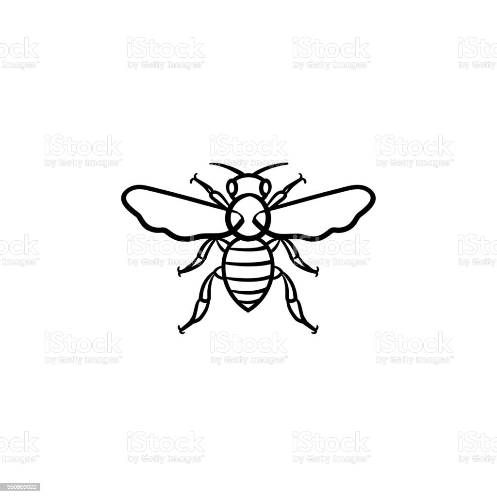 Gezeichnete Skizze Handsymbol Biene Stock Vektor Art und mehr Bilder ...