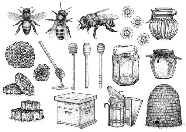 illustrazioni stock, clip art, cartoni animati e icone di tendenza di bee, honey, hive, beekeeping illustration, drawing, engraving, line art, vector - miele dolci