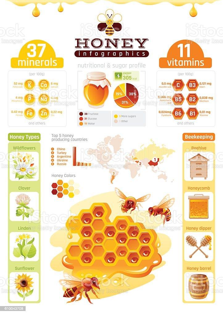 Bee Honey Template Infographics Diagram World Map Food Cartoon Icons
