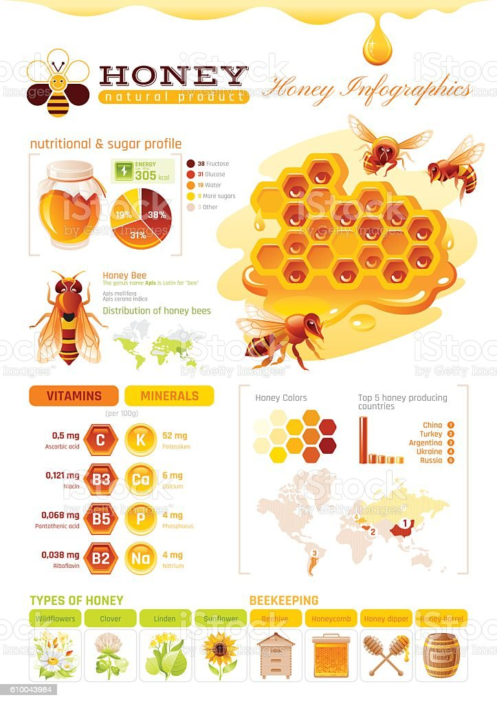 Bee Honey Template Infographics Diagram World Map Food Cartoon