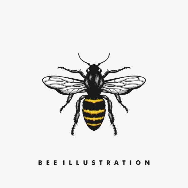 Bee Illustration Concept illustration vector Design template Bee Illustration Concept illustration vector Design template.  Suitable for Creative Industry, Multimedia, entertainment, Educations, Shop, and any related business bee clipart stock illustrations