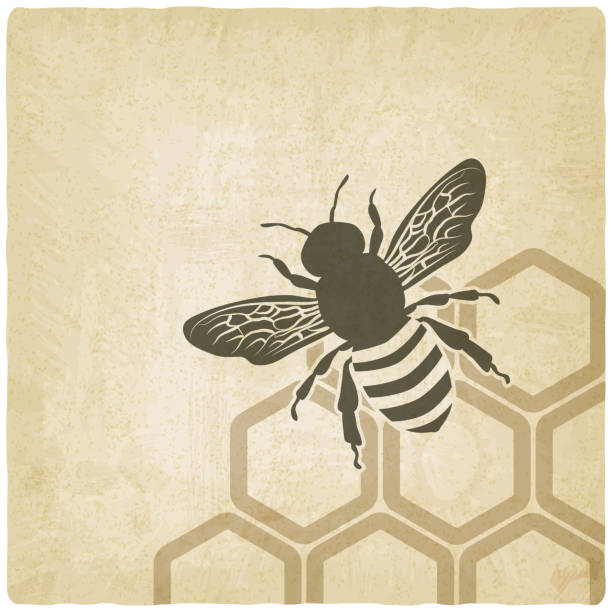 Bee illustration over honeycomb background vector art illustration