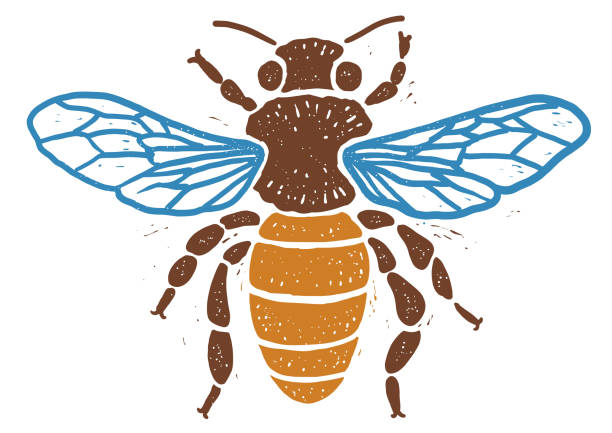 Bee linocut linocut illustration, draw, ink, vector Illustration, what made by linocut, then it was digitalized. linocut stock illustrations