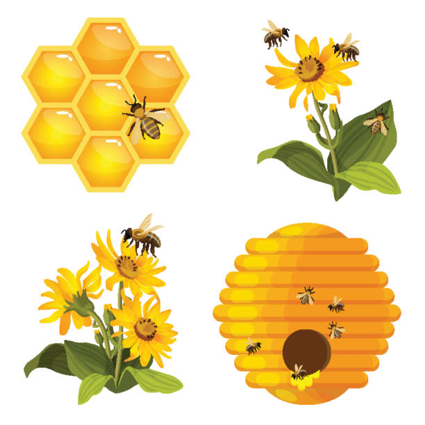 illustrazioni stock, clip art, cartoni animati e icone di tendenza di bee on honeycomb, beehive nest, bees on yellow field flowers set isolated - impollinazione