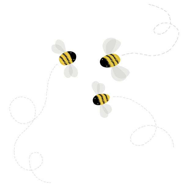 3 bee on white background vector art illustration