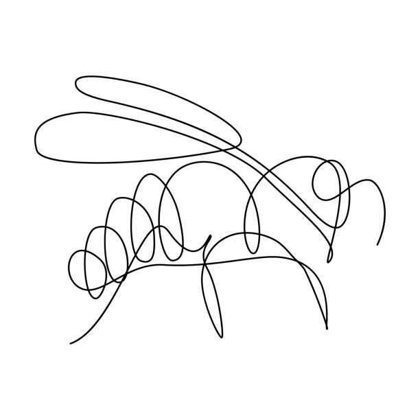 ilustrações de stock, clip art, desenhos animados e ícones de bee - um animal