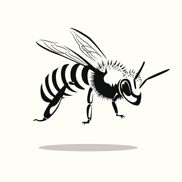 bee image graphic style of bee  isolated on white background queen bee stock illustrations